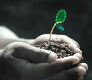 Cnbb convida brasileiros a plantarem uma árvore no dia de finados em memória dos que se foram